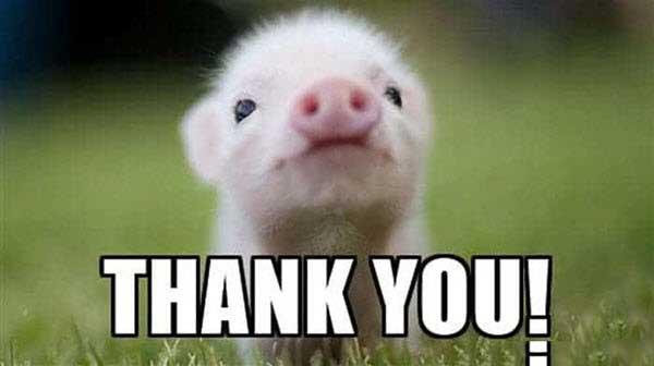 Thank You Piglet